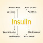 Insulin Hormone Function